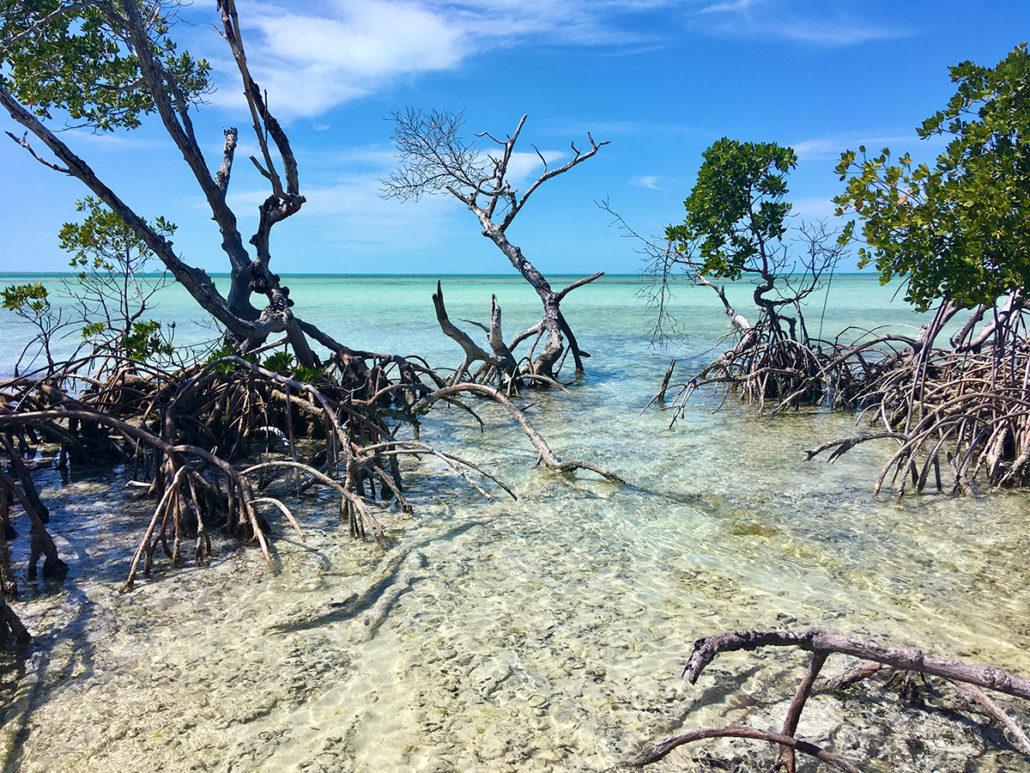 key west mangrove exploration